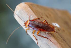 انواع حشرات خانگی و بهترین راههای دفع حشرات
