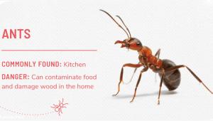 مبارزه با مورچه
