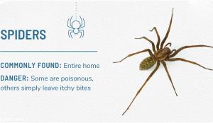 مبارزه با عنکبوت